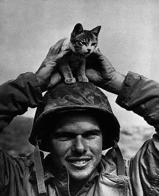 cats_in_army-10_min
